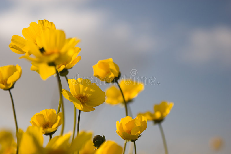 Beautiful Wild Flowers: Yellow 3 stock images