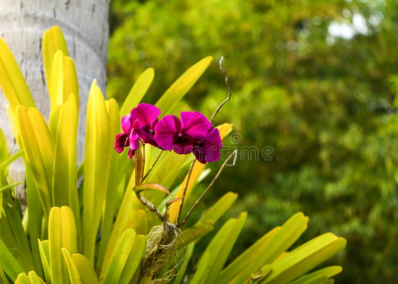 Beautiful wild orchid growing on tree. Bright summer tropical wallpaper stock photo
