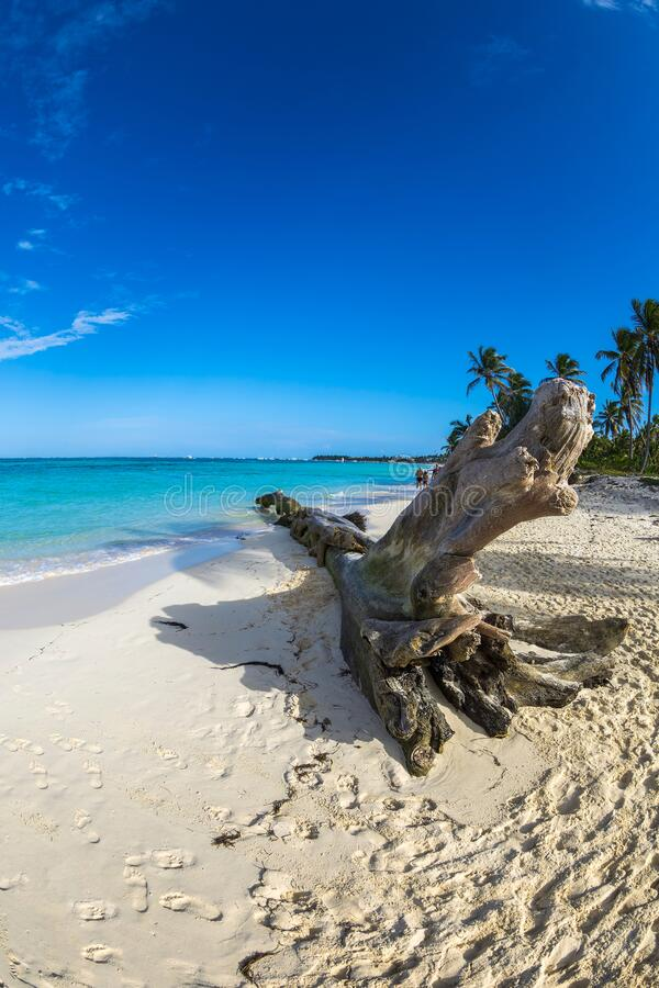 Beautiful wild and sand beach in Punta Cana, Dominican Republic royalty free stock photo