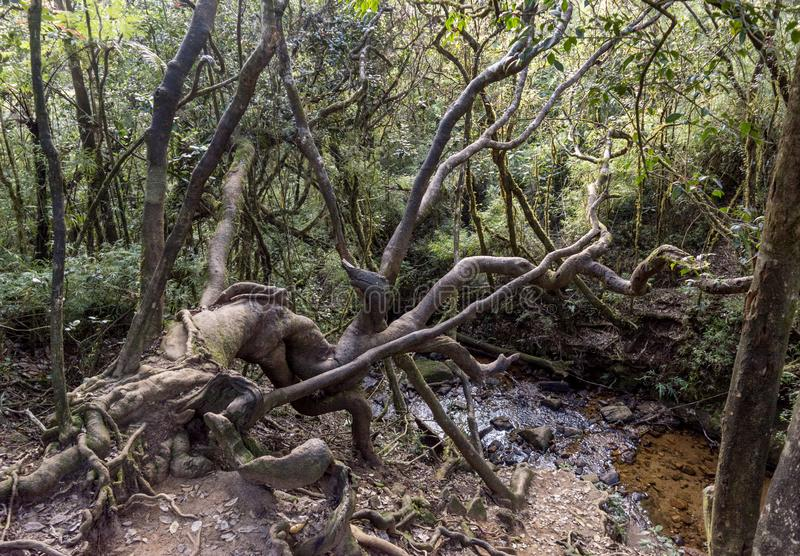 Beautiful wild trees near the pond in the tropical forest stock photos