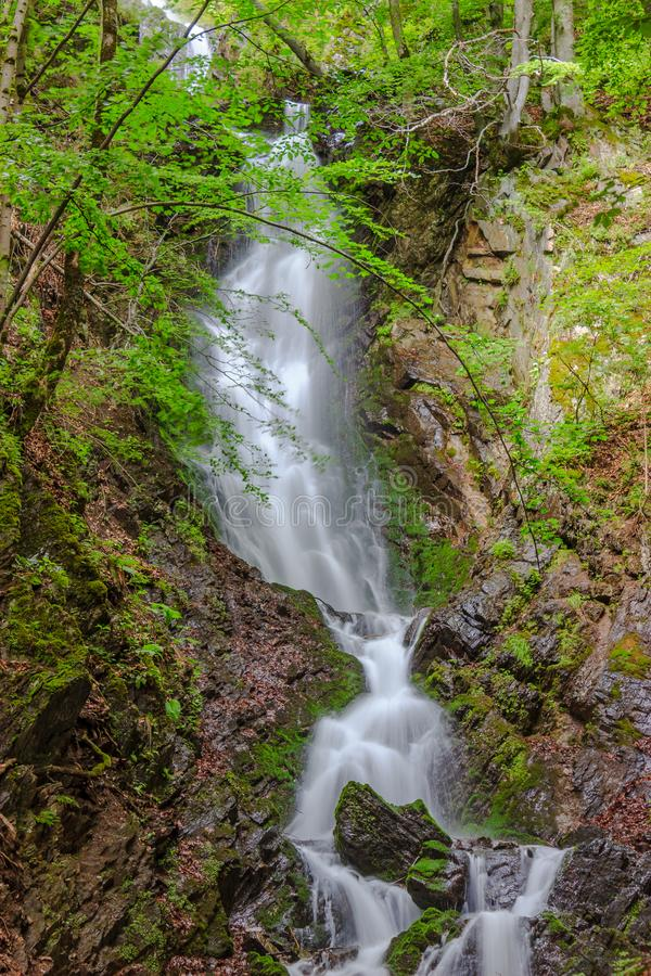 Beautiful wilde waterfall in forest stock image