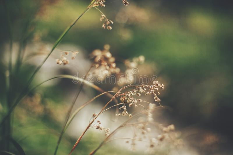 Beautiful wildflower close-up in woods. herbs and grass stems in stock photo