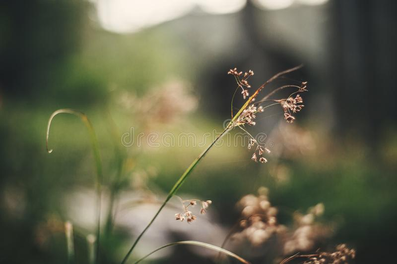 Beautiful wildflowers, close up of dried herbs on background of forest flora. Happy earth day concept. Save environment royalty free stock image