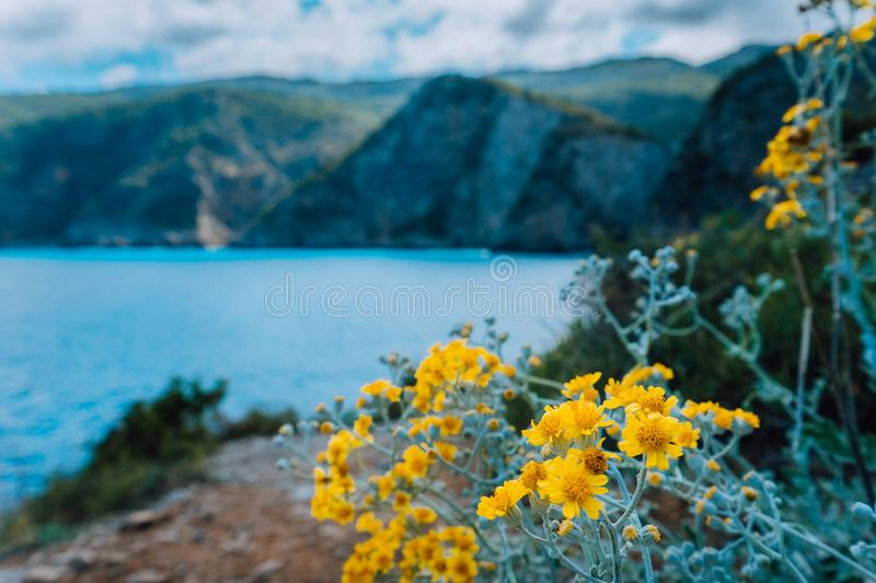 Beautiful Wildflowers in front of amazing mediterranean landscape. Blurred background stock photo