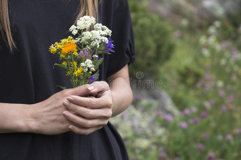 Beautiful wildflowers in hands stock image