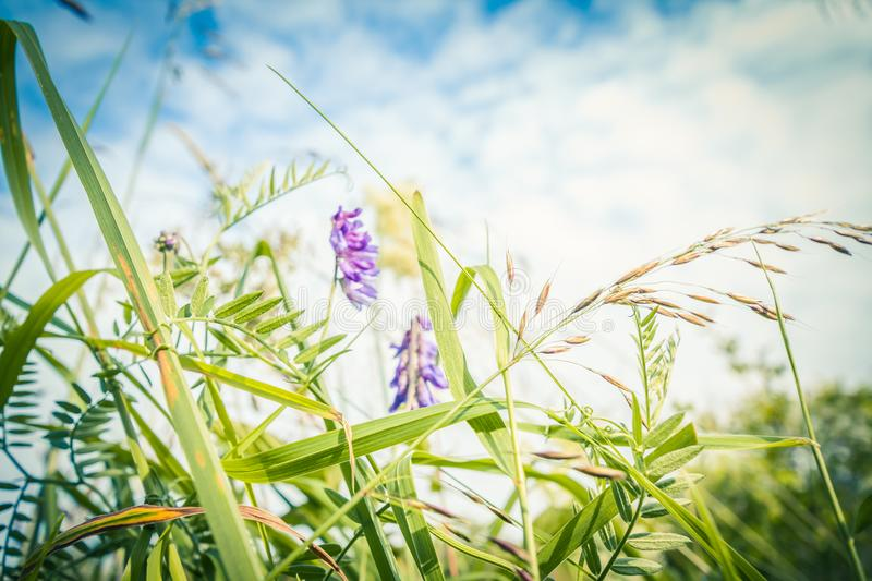Beautiful wildflowers in the meadow, macro shot stock images