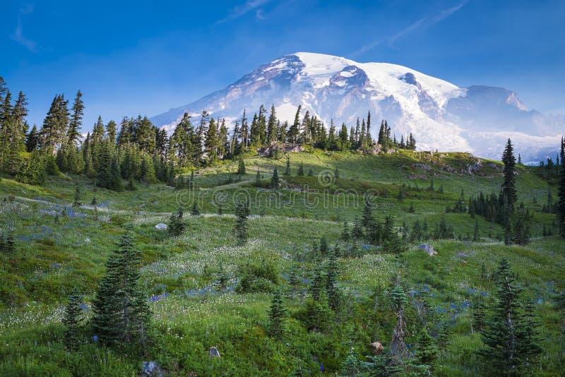 Beautiful wildflowers and Mount Rainier royalty free stock image