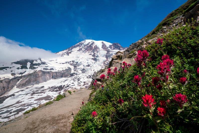 Beautiful wildflowers and Mount Rainier, Washington state royalty free stock images