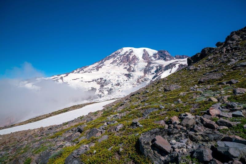 Beautiful wildflowers and Mount Rainier, Washington state royalty free stock photos