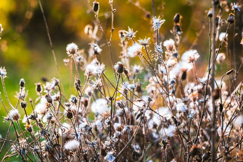 Beautiful wildflowers at sunset in autumn.  stock image