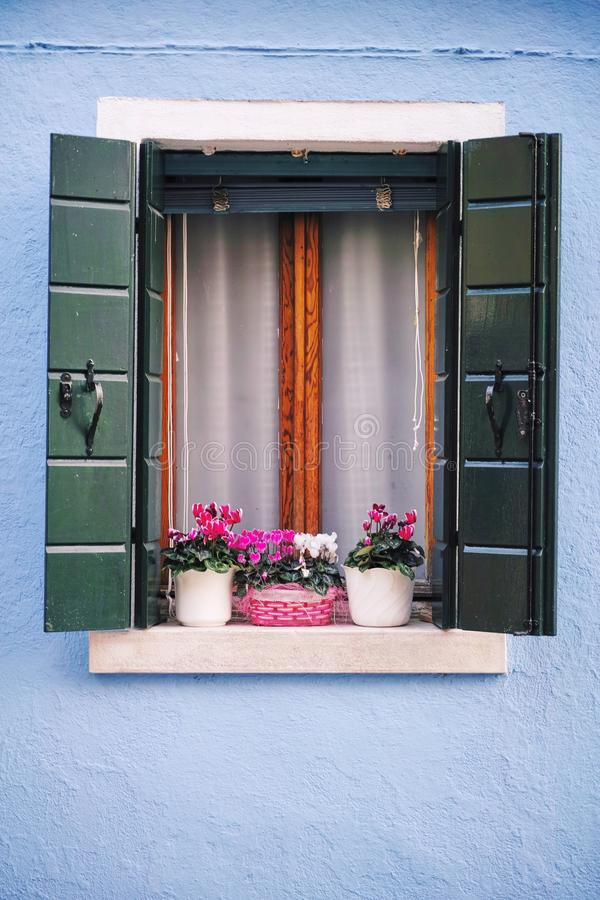 Beautiful Window with flower in Venice stock photography