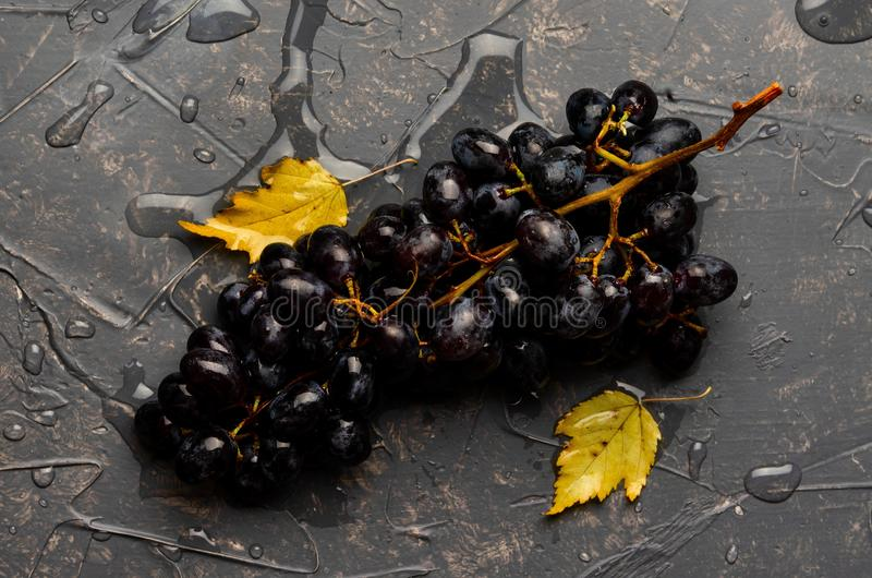 Beautiful wine grapes on a gray backgroundwith yellow leaves royalty free stock images