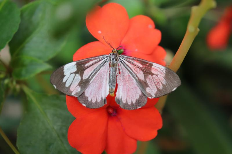 Beautiful winged butterfly perched on the flower bloom. stock photo