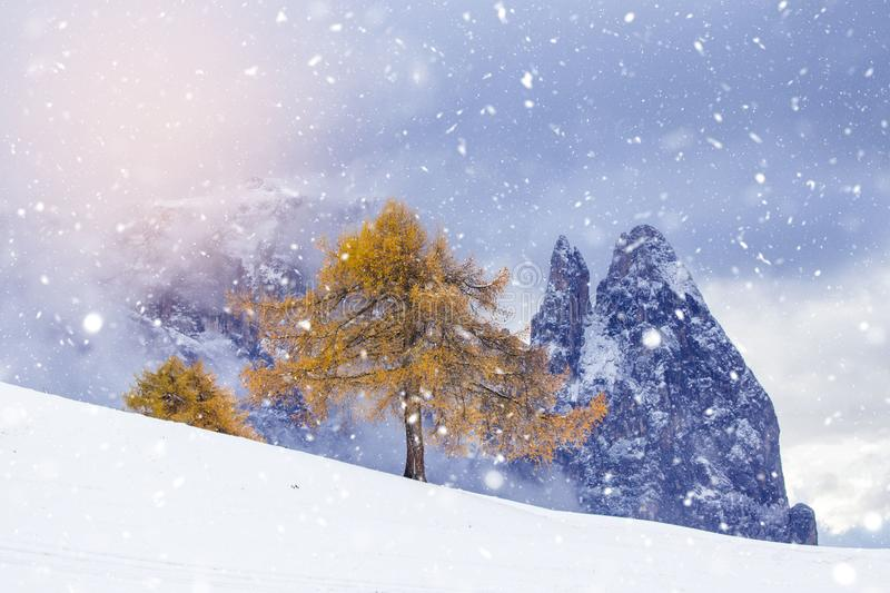 Beautiful Winter at Alpe di Siusi, Seiser Alm - Italy - Holiday background for Christmas. Alpine, alps, beauty, blizzard, blue, card, celebration, cold stock images