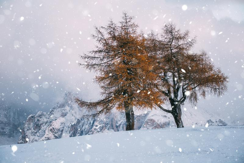 Beautiful Winter at Alpe di Siusi, Seiser Alm - Italy - Holiday background for Christmas. Alpine, alps, beauty, blizzard, blue, card, celebration, cold stock image
