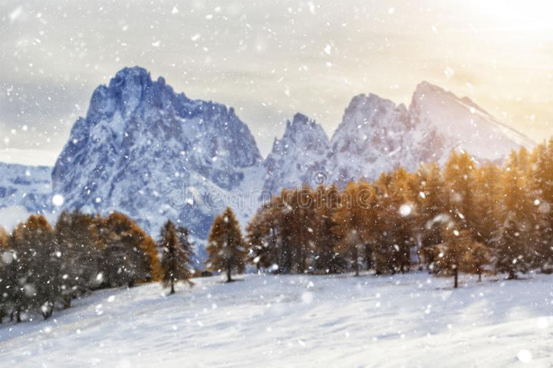 Beautiful Winter at Alpe di Siusi, Seiser Alm - Italy - Holiday background for Christmas. Alpine, alps, beauty, blizzard, blue, card, celebration, cold stock photography