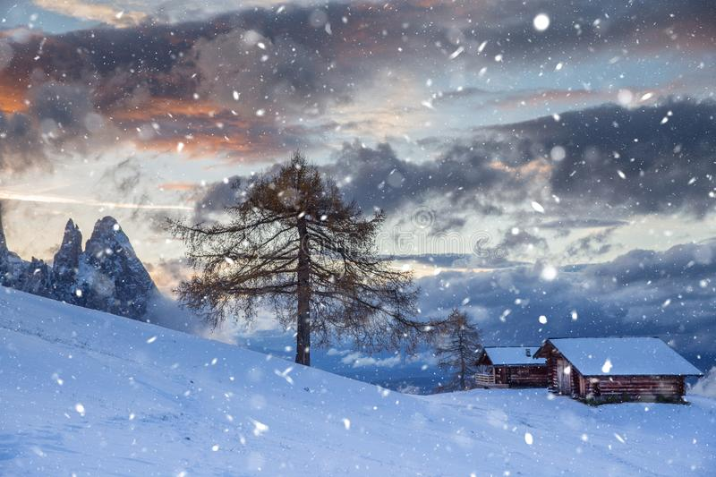 Beautiful Winter at Alpe di Siusi, Seiser Alm - Italy - Holiday background for Christmas. Alpine, alps, beauty, blizzard, blue, card, celebration, cold stock photos