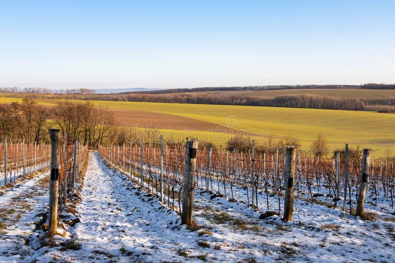 Beautiful winter countryside with vineyards and colorful fields stock photos