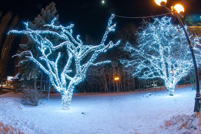Beautiful winter evening with decorated trees royalty free stock photos