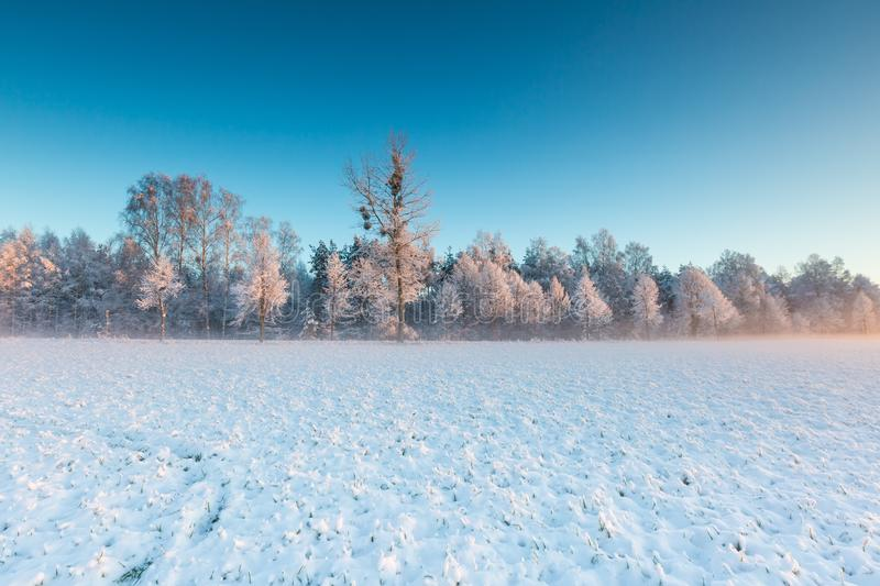Beautiful winter field landscape. Beautiful winter sunrise or sunset landscape. Sun over agricultural field royalty free stock photo