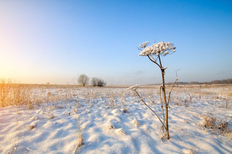 Beautiful winter field landscape at sunset. Beautiful winter field horizon landscape at sunset royalty free stock photo
