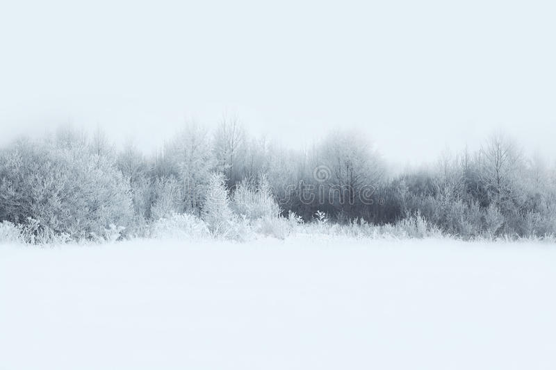 Beautiful winter forest landscape, trees covered snow stock images