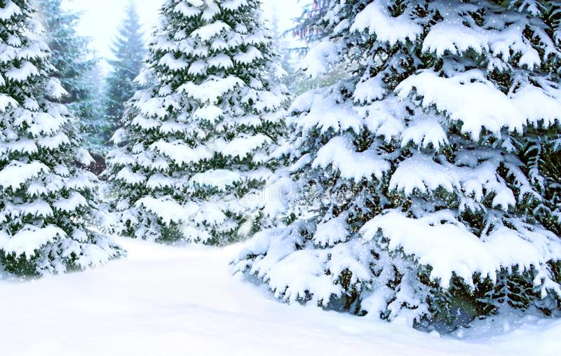 Beautiful coniferous forest in snow. Postcard for New Year. Christmas trees stock photography