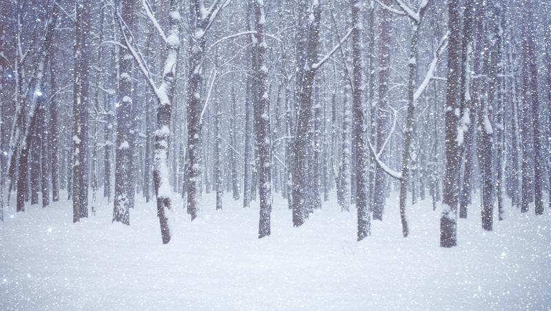 Beautiful Winter forest with trees covered snow stock images