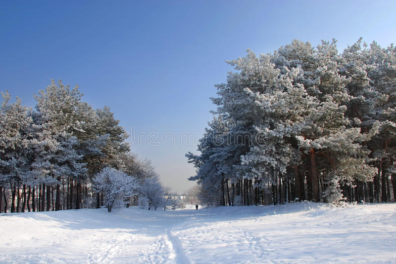 Beautiful winter landscape. With trees covered with snow royalty free stock image