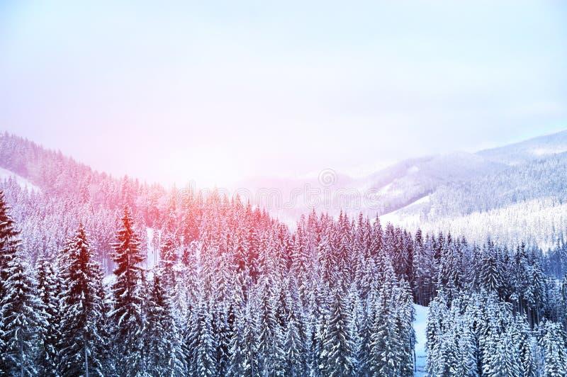 Beautiful winter landscape stock images