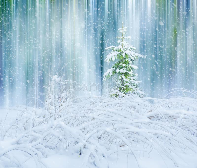 Beautiful winter landscape Christmas tree in the forest snow glade. Christmas postcard royalty free stock photos