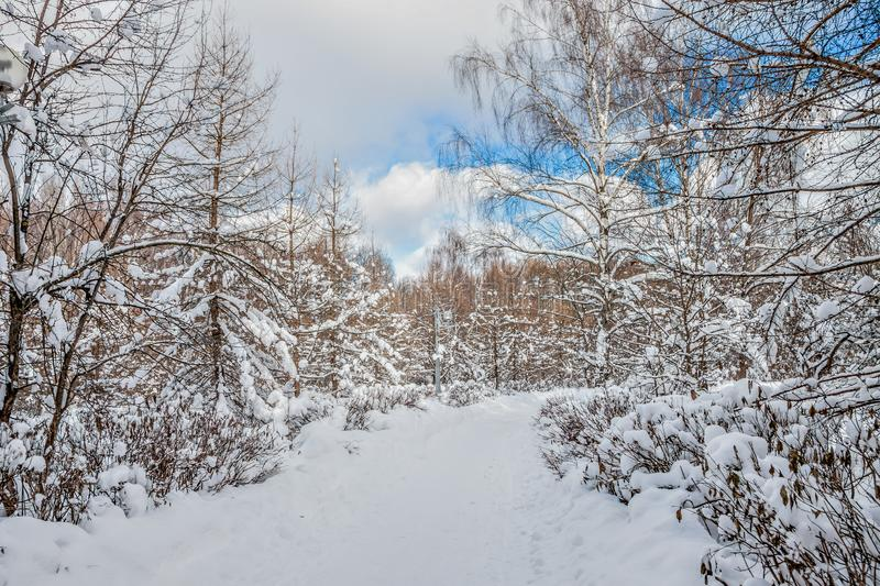 Beautiful winter landscape. The city Park is covered in snow. royalty free stock photo