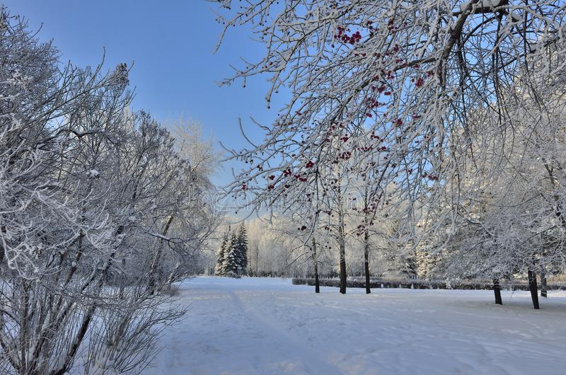Beautiful winter landscape in the city park hoarfrost covered stock photography
