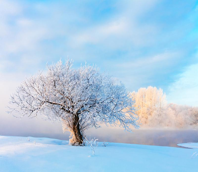 Winter landscape. Cold day royalty free stock image