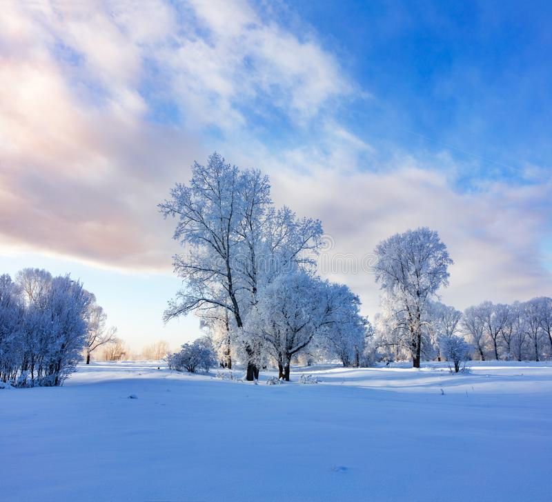 Winter landscape. Cold day stock photos