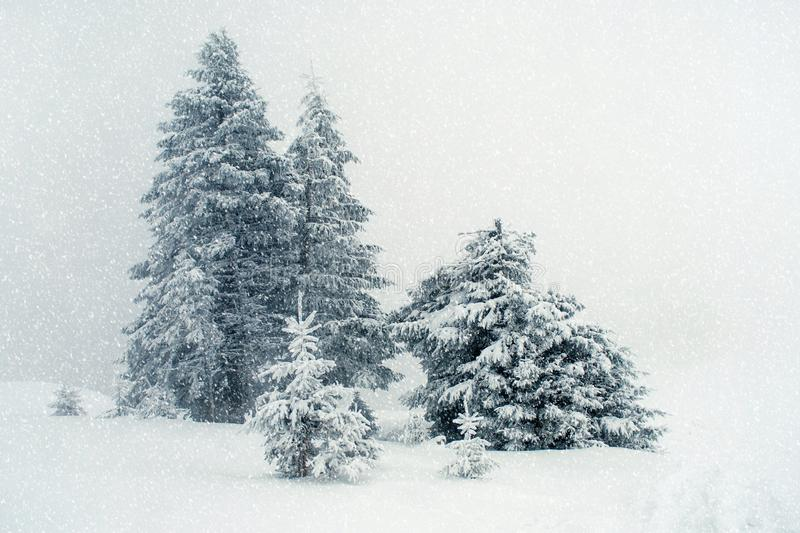 Beautiful winter landscape with fog in the Carpathian mountains, royalty free stock photo
