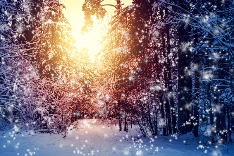 Beautiful winter landscape with forest, trees and sunrise. winterly morning of a new day. Christmas landscape with snow. Beautiful winter landscape with forest stock images