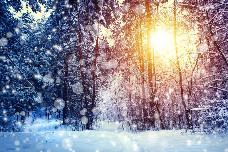 Beautiful winter landscape with forest, trees and sunrise. winterly morning of a new day. Christmas landscape with snow. Beautiful winter landscape with forest stock image