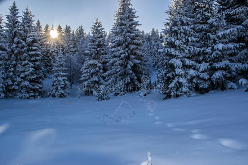 Beautiful winter landscape with forest, trees and sunrise. Winterly morning of a new day. Purple winter landscape with sunset. stock photos