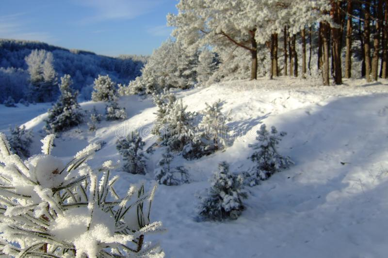 Winter landscape with forest and trees. winterly morning of a new day with a lot of snow. Beautiful winter landscape with forest and trees. winterly morning of a stock photography