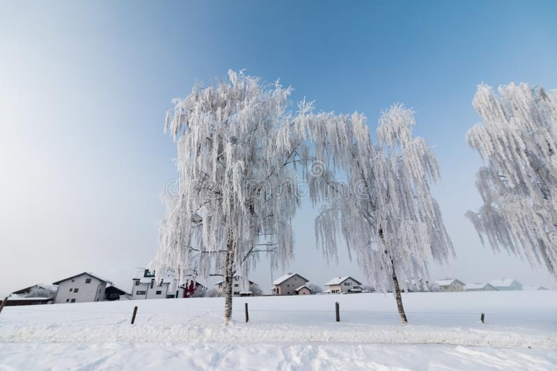 Beautiful winter landscape: Frosty trees in January, Austria. Postcard. Snow and frost covered trees in January. Winter in Austria, frosty, beautiful, landscape royalty free stock image