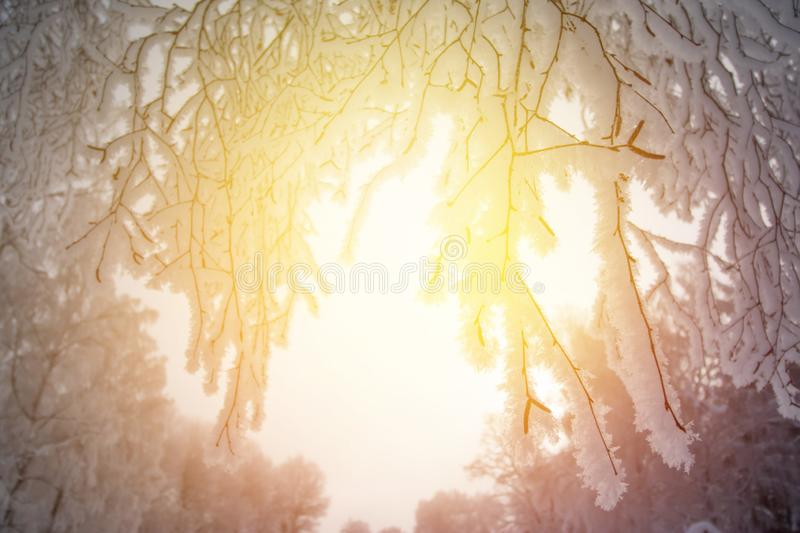 Beautiful winter landscape: Frosty trees in January, Austria. Postcard. Snow and frost covered trees in January. Winter in Austria, frosty, beautiful, landscape stock photo