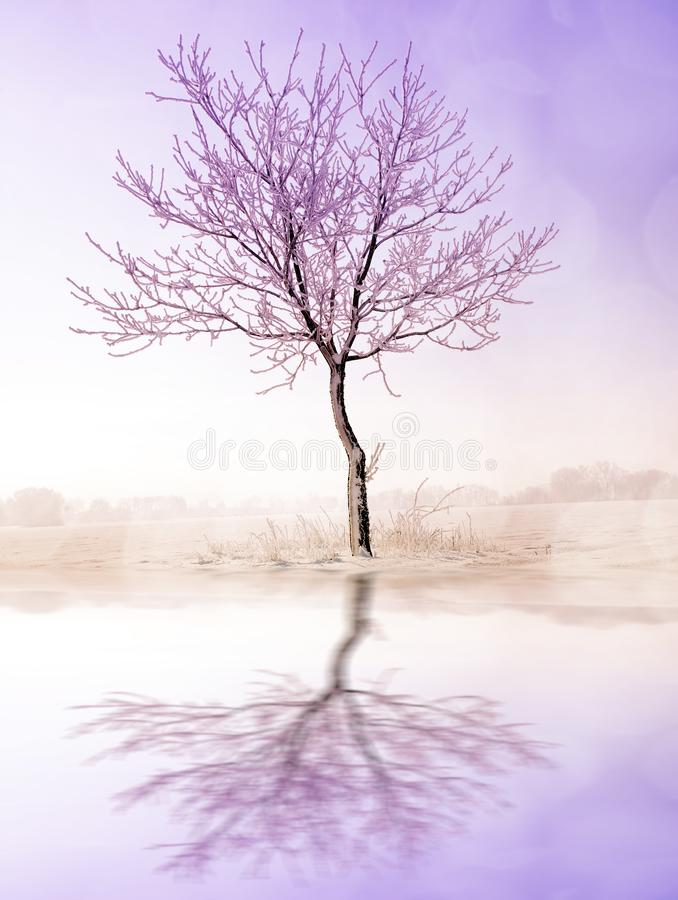 Beautiful winter landscape with frozen tree. royalty free stock photo