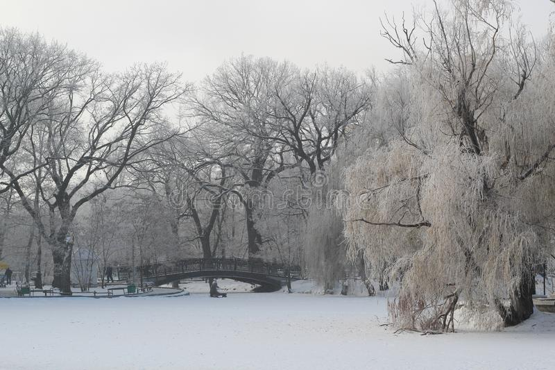 Beautiful winter landscape in the Park. Frozen pond and bridge. royalty free stock images