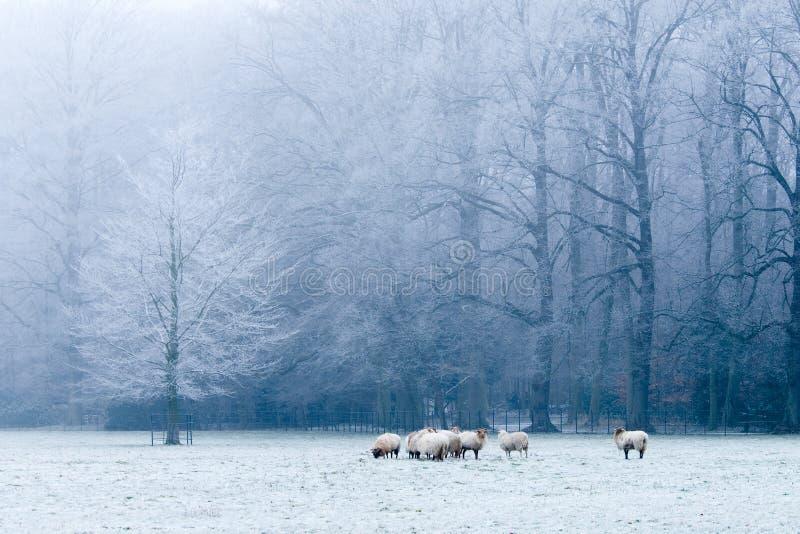 Beautiful winter landscape scene stock photography