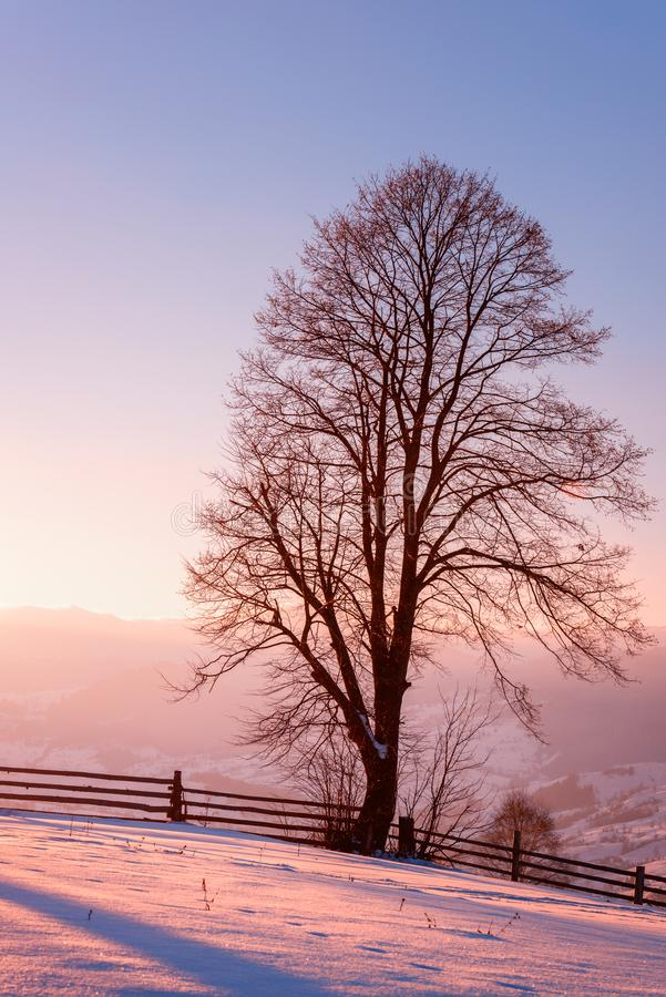 Beautiful winter landscape with single tree in soft sunset light. Vertical image stock photos