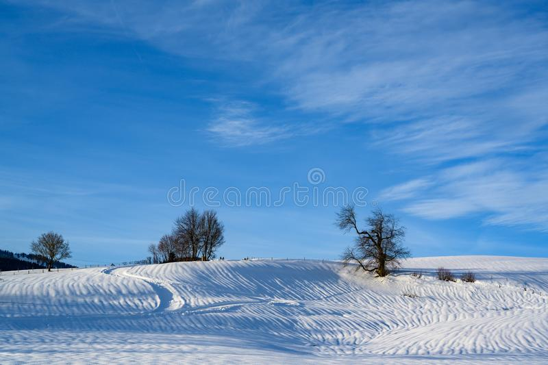 Snowy fields with bare trees in South Germany. stock photo