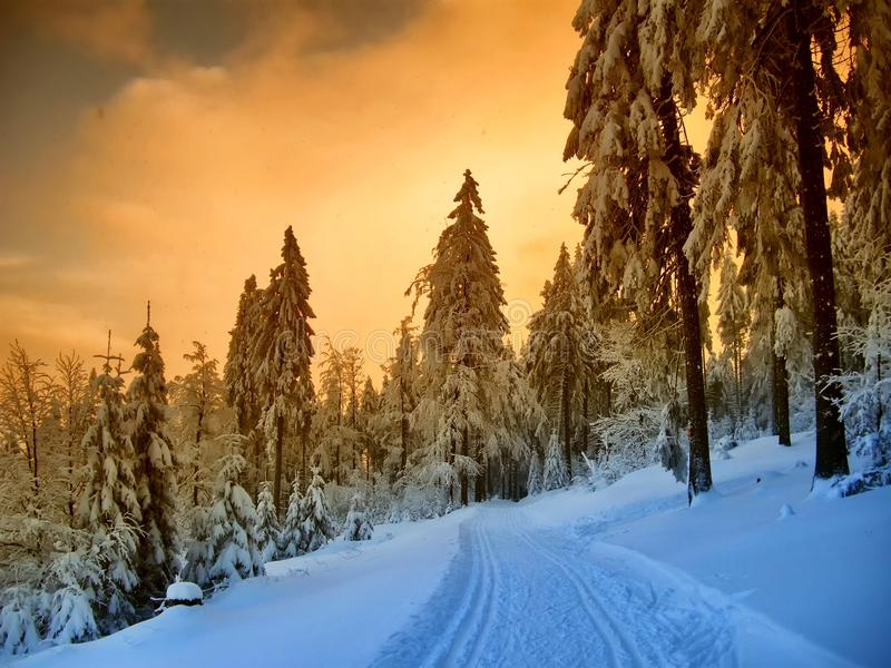Beautiful winter landscape with the snow covered spruce trees. Mountain forest and cross country track at winter day sunset,sunlight, sky and clouds, relaxing stock image