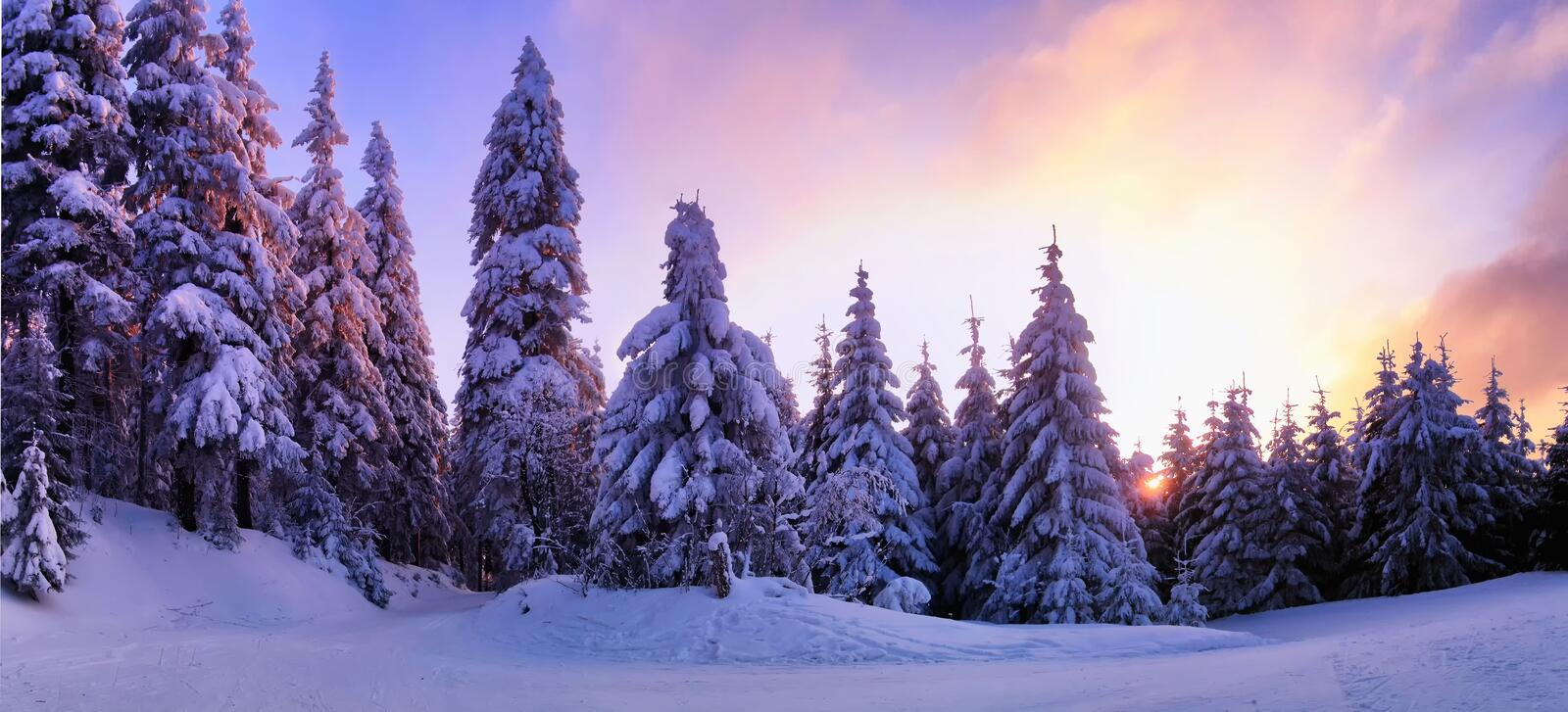 Beautiful winter landscape with the snow covered spruce trees. Mountain forest and cross country track at winter day sunset,sunlight, sky and clouds, relaxing royalty free stock photography