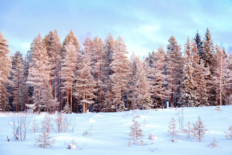 Beautiful winter landscape. With snow covered trees stock images